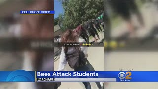 Bees Attack Students