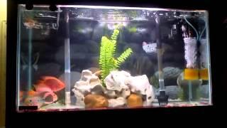 home made moving bio filter for aquarium howto.flv