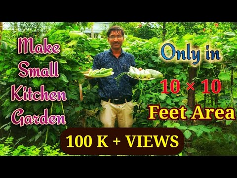 Make a Kitchen Garden in a Small Space Sowing seeds to Harvesting of Fruits