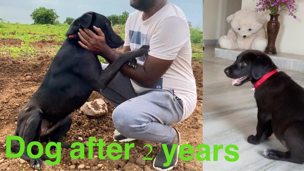 Dog Is so Excited  To Meet Us After 2 Years || Dog transformation || shashimourya