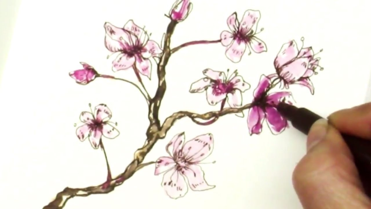 easy how to draw a sakura cherry blossom branch youtube