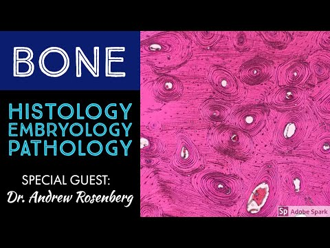 Normal Bone Histology & Embryology with Dr. Andrew Rosenberg
