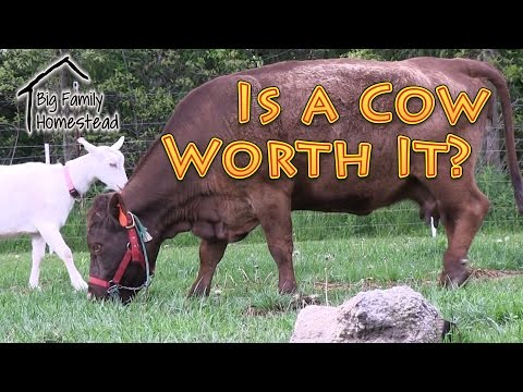 Is a Cow Worth It?