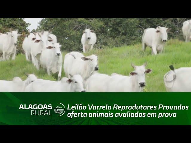 Leilão Varrela Reprodutores Provados oferta animais avaliados em prova de eficiência alimentar