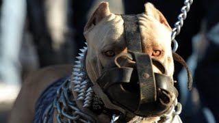 ये हैं  10  सबसे  बड़ी नस्ल के कुत्ते | Top 10 Biggest Dog Breeds in the World