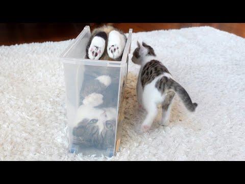 10yrs I have watched Maru... <3 -Maru teaches forward roll to Kitten Miri.-