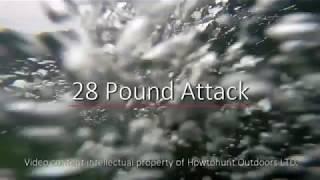 28-pound-attack