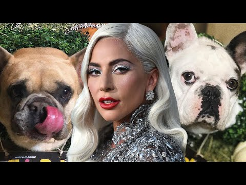 Lady-Gagas-Dogs-Stolen-After-Dog-Walker-Shooting
