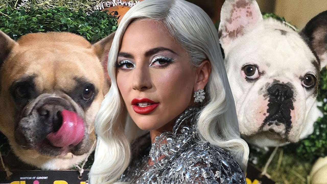 Lady Gaga Dognappers Arrested and Charged With Attempted (VIDEO)