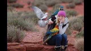 How I Became a BIRD TRAINER! | How to Get Into Bird Training