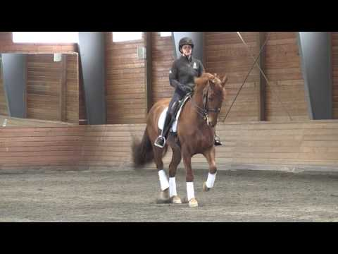 Nicol Hinde ~ Christophe Theallet Dressage Clinic ~ April 2017