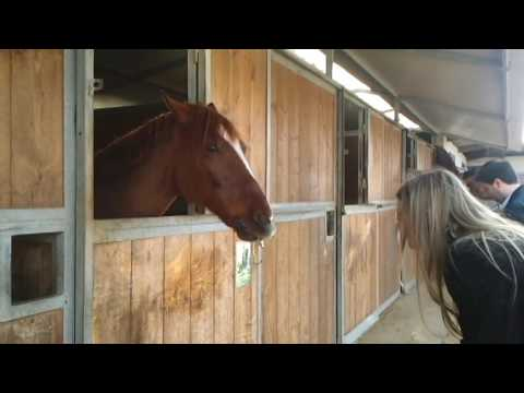 Cavallo su cicciolina