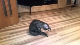 Котенок после ванны