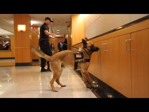 Diplomatic Security Officer and Dog