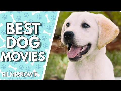 Best Dog Movies Ever [HD]