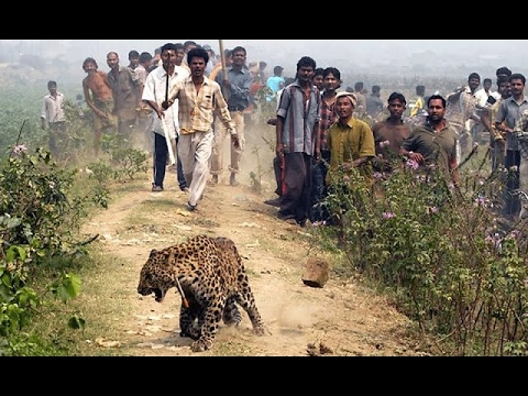 LEOPARD ATTACK HUMAN IN INDIA 2016 part 2 - YouTube