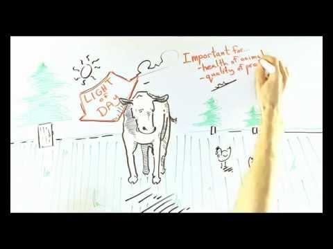 What is Organic Farming - From an Ontario Organic Farmer