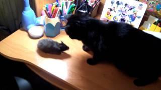 ШОК!!! Хомяк хочет укусить кошку!!!!!!!!!!