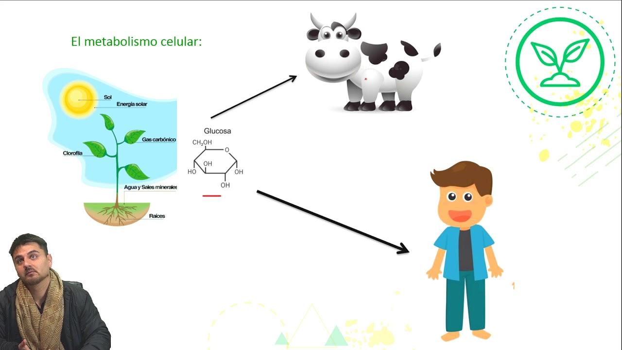 Metabolismo secundario libro pdf