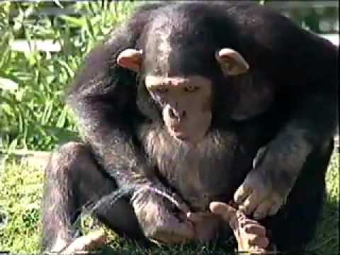 Chú Khỉ con  nghịch ngơm