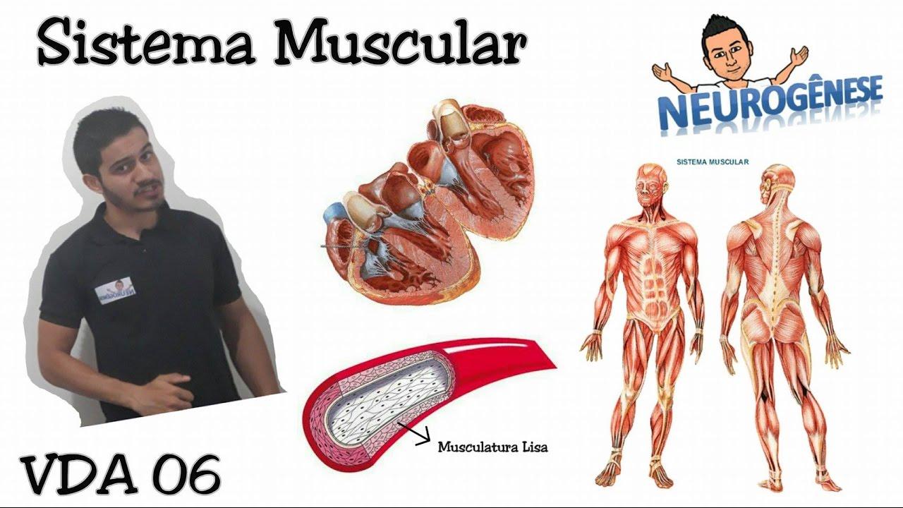 Sistema Muscular - Tipos de músculos - Vídeo Aula 06 - YouTube