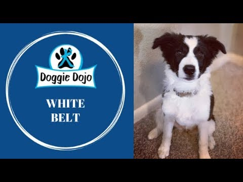White Belt Test - Doggie Dojo Dog Ninjas #DoggieDojo