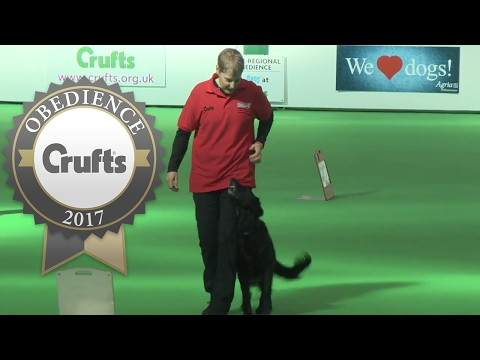Inter-Regional Rally - Level 3 - Part 2 | Crufts 2017