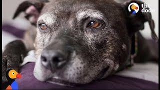 Dying Dog Gets The BEST Bucket List from Her Family | The Dodo