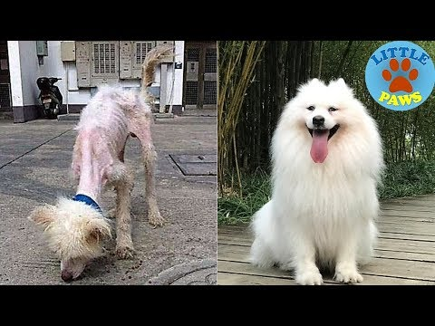 60 Unbelievable Before & After Rescue Dog Transformations PT.1