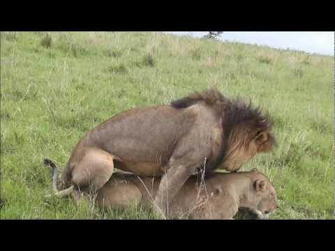 Elephant pulls out at the right timeKaynak: YouTube · Süre: 1 dakika1 saniye