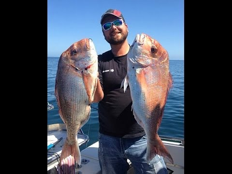 Snapper Fever - Port Phillip Bay fishing with Ange and Anton.  Location, tips and rigging techniques