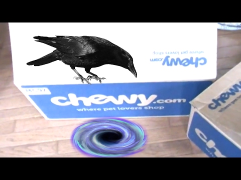 Unboxing Chewy.Com  Pet Supplies!