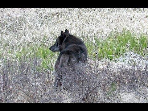 Daly Creek - Yellowstone National Park - May 5