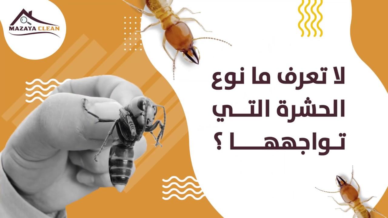 خدمات مكافحة الحشرات في ابوظبي | افضل شركة مكافحة حشرات في ابوظبي