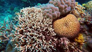 Diving the Agincourt Reefs, Great Barrier Reef, Queensland, Australia