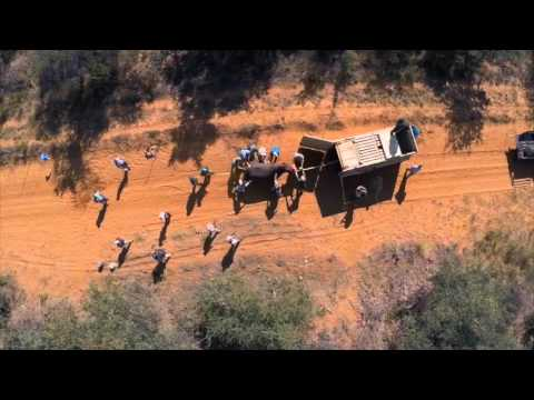 Exxaro's rhino relocation project documentary