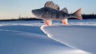 Клевая рыбалка в Республике Саха Якутия