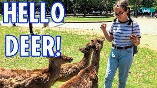 Must Visit Deer Park in Japan!