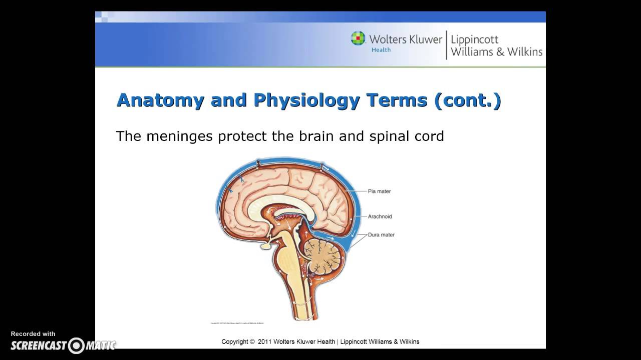Medical Terminology - Chapter 12 - Live Lecture 12.1 - YouTube