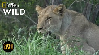 Safari Live - Day 299 | Nat Geo Wild