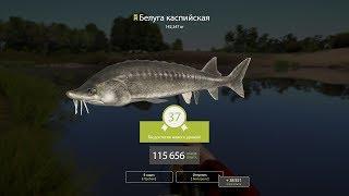 Русская Рыбалка 4►Белуга Каспийская*Ахтуба*РР4RF4