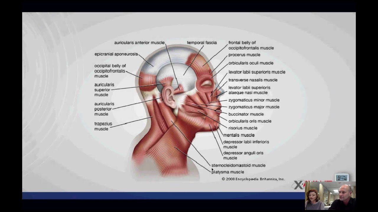 Treating headaches with the stimpod nms460 webinar 26 treating headaches with the stimpod nms460 webinar 26 september 2017 pooptronica Image collections
