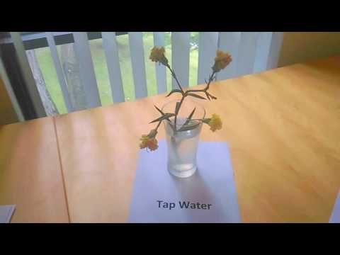 Growing Flowers in Tap Water, Tensor Ring Water and Vitalized Water