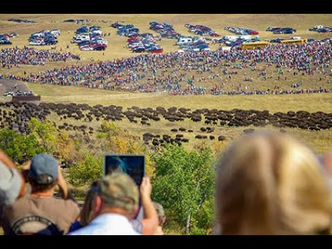 Buffalo Roundup Custer State Park South Dakota