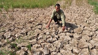 Vietnam drought delays rice farming as Mekong waters drop