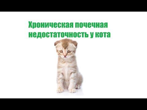 Вопрос: Как поддержать жизнь кота с почечной недостаточностью?