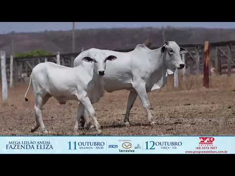 LOTE 222