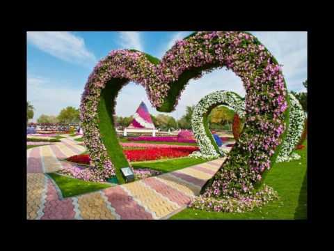 10 самых красивых цветов в мире 10 фото текст Релаксик