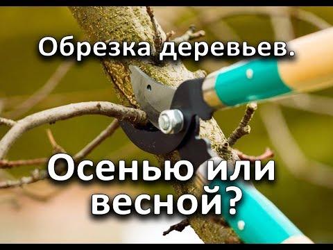 Когда лучше обрезать деревья? Осенью или весной?