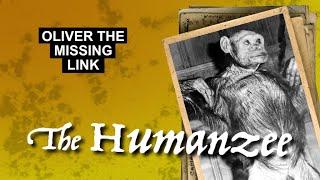 Humanzee
